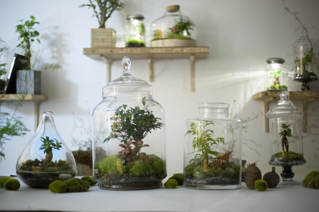 Green_Factory_garden